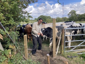 Roger and cows in Timperley Sept 20