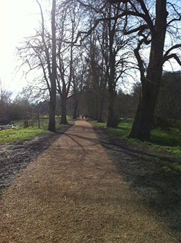 New path created through the work of the Friends of the Carrs.