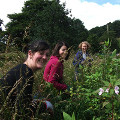 Volunteers pullin up Himalayan Balsam